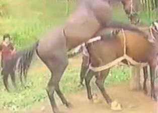 Horses fuck on cam in doggy style pose